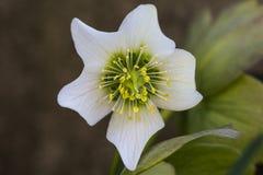 Una flor hermosa imagen de archivo