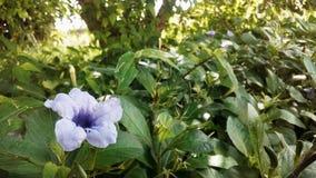 Una flor hermosa fotos de archivo