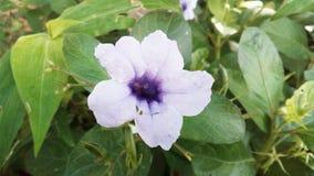 Una flor hermosa Imagenes de archivo