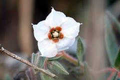 Una flor hermosa con la planta en Graden Fotografía de archivo