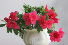 Una flor hermosa en un florero Imagen de archivo libre de regalías