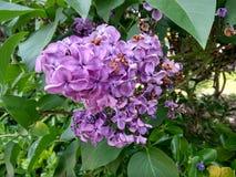 Una flor hermosa en un jard?n foto de archivo libre de regalías