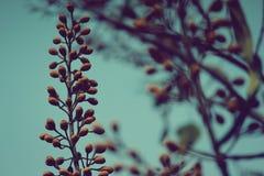 Una flor hermosa por completo de bayas y de conos fotografía de archivo libre de regalías
