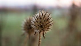 Una flor interesante rodeada por el verde Imagen de archivo