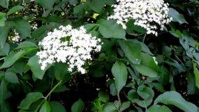 Una flor más vieja en primavera metrajes