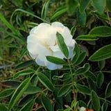 Una flor no puede florecer sin una sol fotografía de archivo libre de regalías