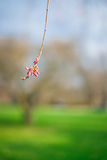 Una flor roja abajo de un árbol Foto de archivo libre de regalías