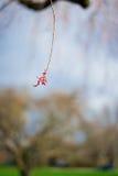 Una flor roja abajo de un árbol Fotografía de archivo