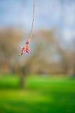 Una flor roja abajo de un árbol Fotos de archivo libres de regalías