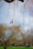 Una flor roja abajo de un árbol Imágenes de archivo libres de regalías