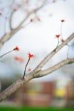 Una flor roja abajo de un árbol Imagenes de archivo