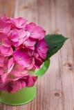 Una flor rosa clara de la hortensia en una regadera verde imagen de archivo libre de regalías
