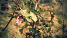 Una flor rosada Imagen de archivo libre de regalías