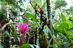 Una flor rosada y dos macaws en el bosque fotografía de archivo