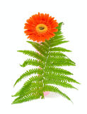 Una flor y hoja verde Foto de archivo