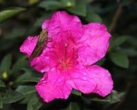Una flor y su amigo Fotos de archivo