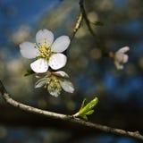 Una floración Imagen de archivo libre de regalías