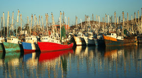 Una flota de barcos atracados del camarón Imagen de archivo