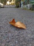 Una foglia asciutta caduta sul pavimento della strada cementata fotografia stock