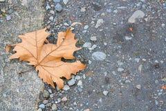 Una foglia asciutta sull'asfalto di inverno Immagine Stock