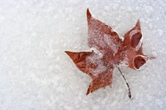 Una foglia, bloccata nel ghiaccio Fotografia Stock Libera da Diritti