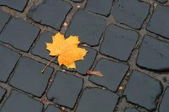 Una foglia di acero su pavimentazione Fotografia Stock