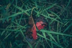 Una foglia di autunno immagini stock libere da diritti