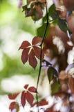 Una foglia di autunno contro il bello fondo del bokeh Fotografia Stock Libera da Diritti