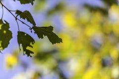 Una foglia di autunno contro il bello fondo del bokeh Immagini Stock
