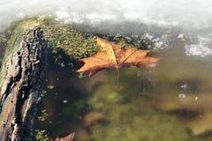 Una foglia di frozsen Immagine Stock
