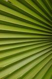 Una foglia di palma della noce di cocco Fotografia Stock Libera da Diritti