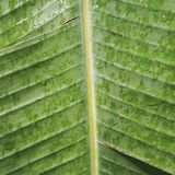 Una foglia di una palma ha fotografato il primo piano Immagini Stock