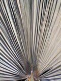 Una foglia di palma secca fotografie stock