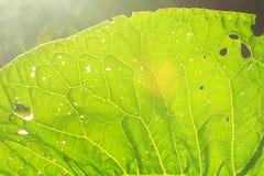 Una foglia di una pianta su un lucernario Fuoco molle fotografie stock