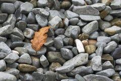 Una foglia di un albero si trova sulle pietre fotografie stock libere da diritti