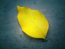 Una foglia gialla luminosa su un pavimento di calcestruzzo grigio scuro nella grande prossimità immagini stock