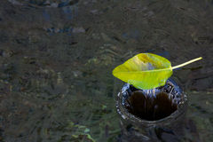 Una foglia sta andando giù in un vortice dell'acqua Fotografia Stock Libera da Diritti