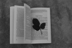 Una foglia sul libro di natale infelice Fotografie Stock Libere da Diritti