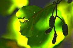 Una foglia verde con un fondo più verde fotografia stock
