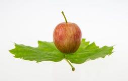 Una foglia verde e una mela minuscola Fotografia Stock Libera da Diritti