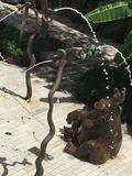 Una fontana di rinfresco a Miami fotografie stock libere da diritti