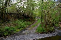 Una forcella nella via in una superficie boschiva, tramite una corrente con i lotti di erba verde e degli arbusti alberi immagini stock libere da diritti