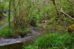 Una forcella nella via in una superficie boschiva, tramite una corrente con i lotti di erba verde e degli arbusti alberi fotografia stock libera da diritti
