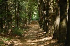 Una foresta fotografia stock