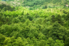 Una foresta Immagine Stock Libera da Diritti