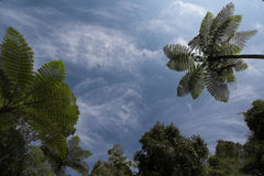 Una foresta antica Fotografie Stock Libere da Diritti