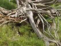 Una foresta attraverso cui la tempesta è passato Immagine Stock