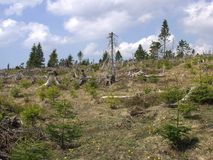 Una foresta attraverso cui la tempesta è passato Fotografia Stock Libera da Diritti
