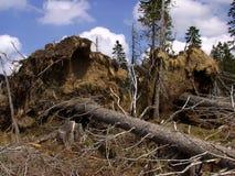 Una foresta attraverso cui la tempesta è passato Immagine Stock Libera da Diritti