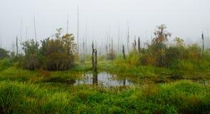 Una foresta dei morti e degli alberi di cipresso di morte nella nebbia a Guste Isl fotografie stock libere da diritti
